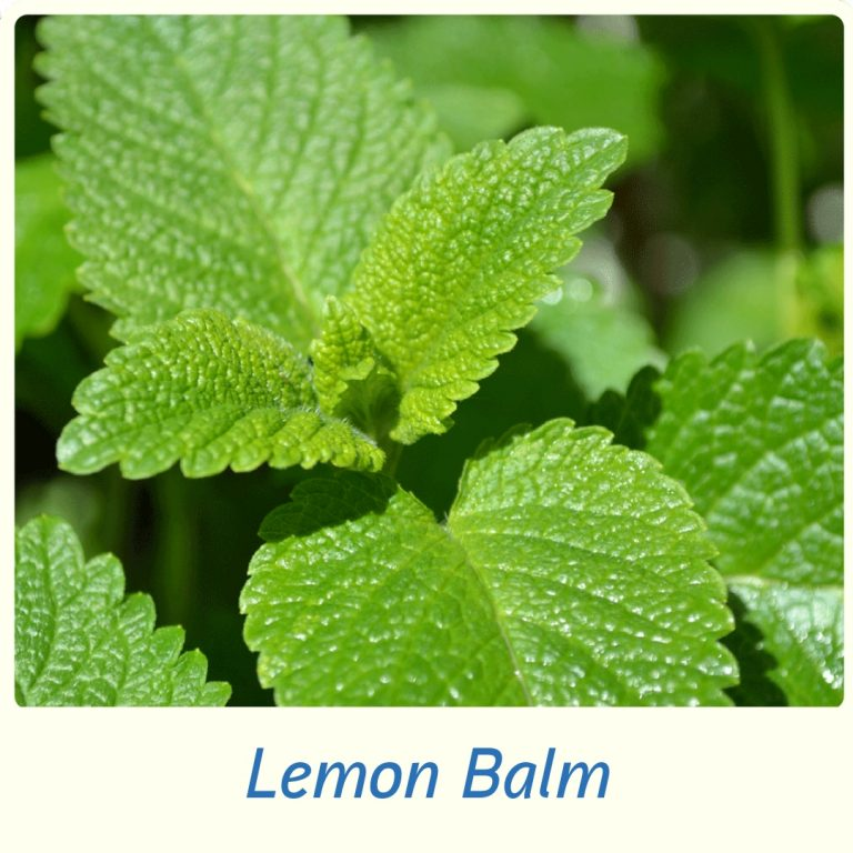 Eases stomach and bowel cramps, as well as reducing gas and pain